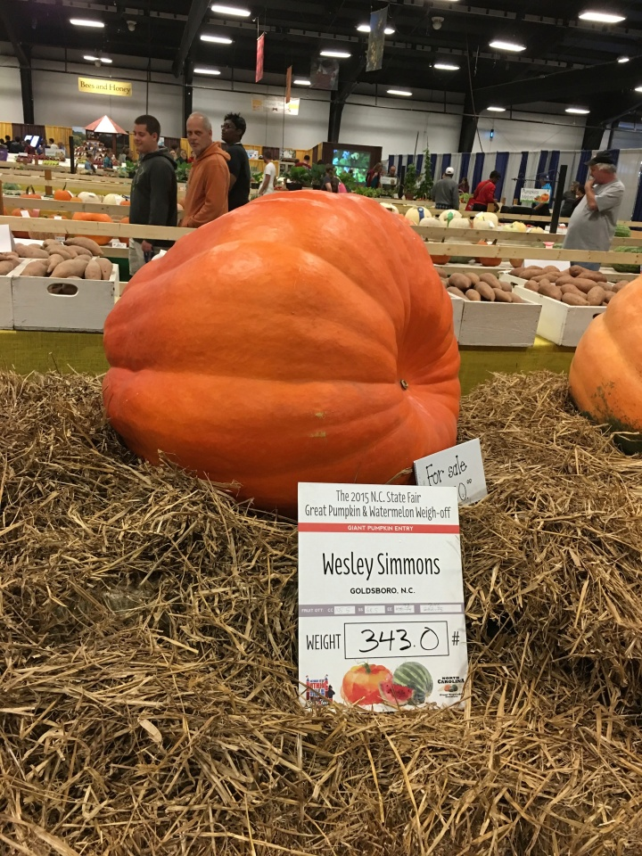 sylvia's pumpkin