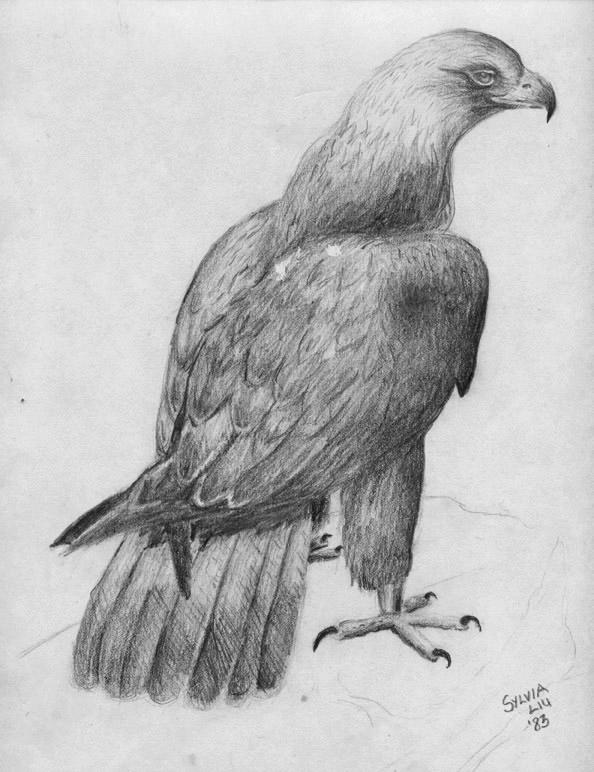 eagle-sketch-s-liu-1-copy